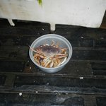 Crabs we were taking home for the seafood eating side of the family