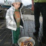 Aiden inspecting the crabs for us