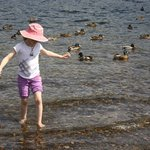 wading with the ducks