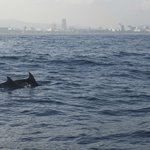 Dolphins and Barcelona