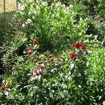 flowers in Deepwood gardens