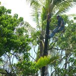 Worker trimming trees