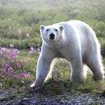 who needs a wildlife photographer - I took these