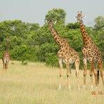 Wildlife roaming around