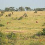 Hiking Safari (A MUST DO)