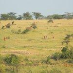 Hiking Safari