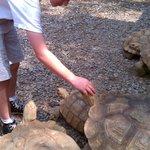 petting the Tortoises