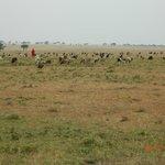 Masai People around