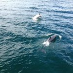 2 of the dolphins we saw