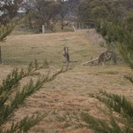 Can you see the kangaroo's - they were very inquisitive - the kids loved them!
