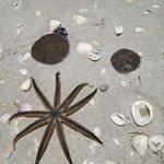 sea critters on caribe's beach