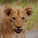 African Safari Adventures - Day Tours