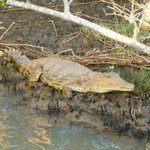Friendly Croc
