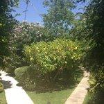 Les magnifiques jardins