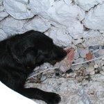 Blacky enjoying raw chicken :)