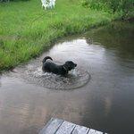 Bailey enjoys the pond