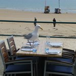 An uninvited guest at the Oyster Box, St. Brelade's Bay