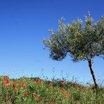 Alen d' Aragon landscape