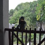 aapje op ons balkon