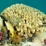 Coral with fish