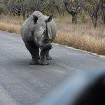 A rhino blocks our path