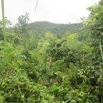 zipline into the bushes