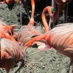 flamingo with egg in nest