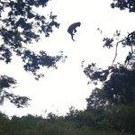 Tree hopping !!! Xxx