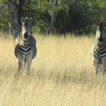On Safari - The 3 Amigos