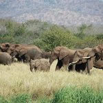 Elephants close to the river bed
