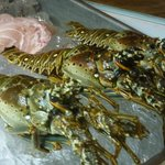 lobsters (langosta, no claws)
