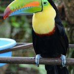 Oscar the toucan who lives in the cage by the breakfast area