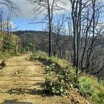 Bike and running trail