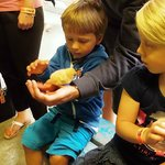 The grandchildren handle the chicks but aren't too sure!