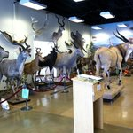 Just a few of the exhibits at Calll of the Wild