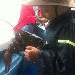 Lobster demo