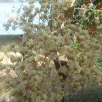 Uma árvore na porta do nosso chalé