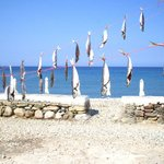 north west beach:taverna fishes