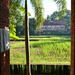 View on the rice fields, from the porch