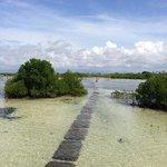 Olango Island Photo