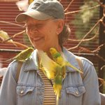 My wife accosted by carnivorous parakeets