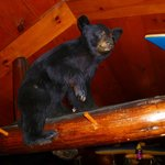 Black Bear Bar & Grill - Bear in the rafters - Hwy 70 Minocqua Wisconsin