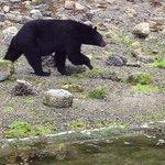 bears up close