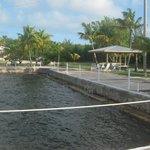 Photo de Diver's Cove