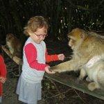 Les enfants donnent à manger aux singes sans risque