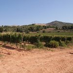 View on the vines