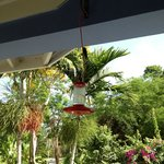 dining on front porch with the humming birds