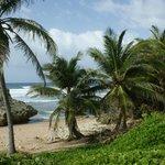 Beach and surroundings