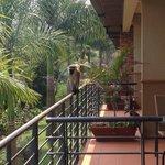 Monkeys on the balcony