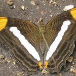en el jardin mariposa